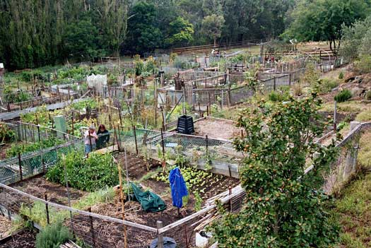 comm_gardens-collingwood