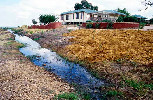 The swale, or infiltration trench, at Fairfield City Farm in south-western Sydney details and infiltrates rainwater running downslope.