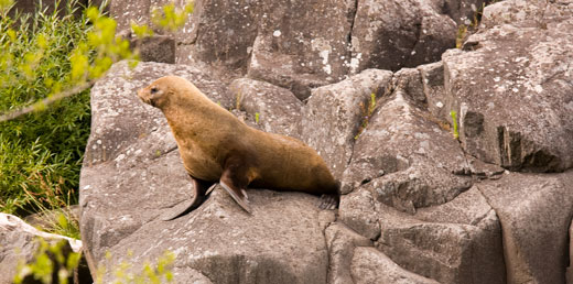 Seals, possums and pests... wild in the city