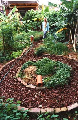 A circular herb garden was built around a sunken pond. The clay pipe provided habitat for lizards or other wildlife.