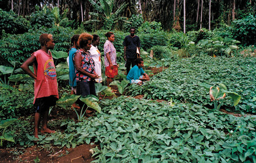 Participatory approach introduces new methods to growers