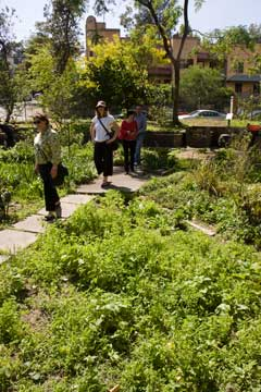 Visitors explore Cook Community Garden.