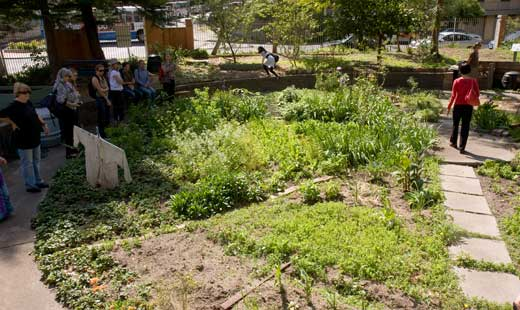 Cook Community Garden was the first built on the Waterloo Estate. It is a small but well-used community garden producing vegetables and culinary herbs and providing active rcreation and learning to its gardeners.