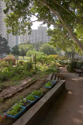 Marton Community Garden is one of three on the Watrloo Estate. The small but productive garden is farmed by residents of the public housing project that surrounds it.