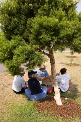 Seated under ths shade of a paperbark, a small team develops ideas for the permaculture interpretive garden.