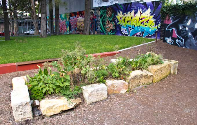 One lonely garden bed was the first planting in Bourke Street Park Community Garden. Sandstone blocks on site were hurriedly assembled into a garden and filled with soil by the construction company on the day before the official opening of the renovated Bourke Street Park. I went out and bought seedlings of vegetables and herbs and planted them on the morning of the official opening by the Lord Mayor so that people attending the opening would have some indication of the comity garden. Somehow, completely untended, many of the plants survived, grew to maturity and fruited over the succeeding months.
