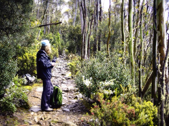 The Organ Pipes Track — sunshine and ice