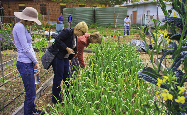 Community gardens create opportunity for food production and social interaction.