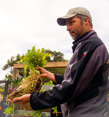 Landscape architect, Steve Batley, teaches aquaponics at Randwick's Permaculture Interpretive Garden.