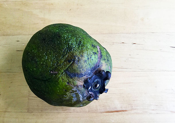 As the sapote ripens it starts to discolour, becoming darker and softer.