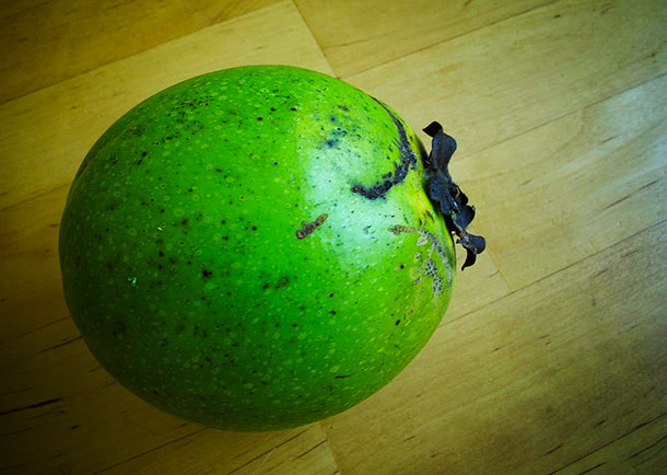 How it starts… the unripen black sapote is rock-hard and needs be left to ripen for some days.
