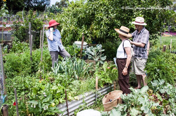 Internships in permaculture: federal report raises questions